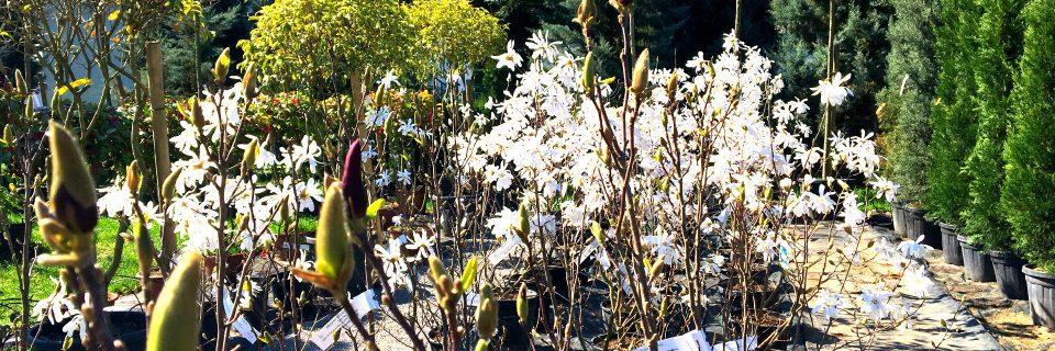 Sie finden bei uns eine große Auswahl beliebter Gartenpflanzen. Kommen Sie vorbei!