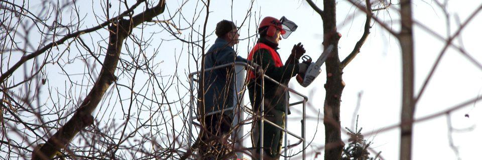 Vom Heckenschnitt bis zur fachmännischen Baumrodung - bei uns sind sie in professionellen Händen